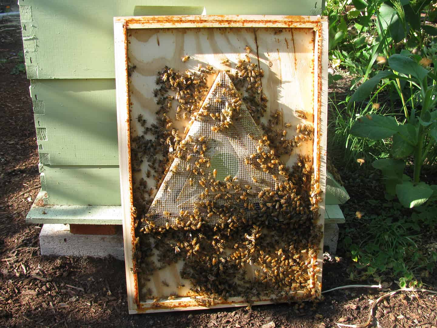 Great For Harvesting Honey BEE ESCAPE 10 FRAME