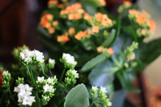 houseplants_2