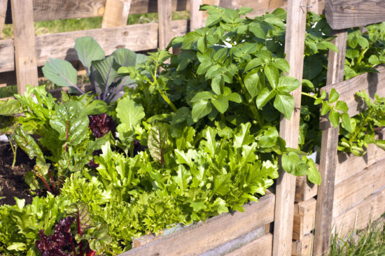 Osu Extension Resources On Starting A Vegetable Garden And More Shonnard S